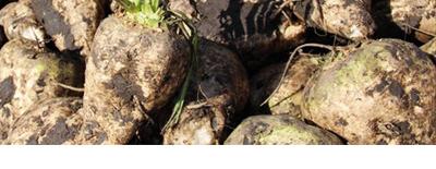 biomasse-klein